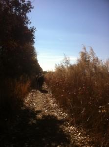 trail ride pic