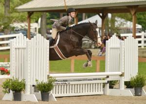 Max - Quarter Horse